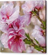 Valley Blossoms Acrylic Print