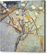 Van Gogh: Peartree, 1888 Acrylic Print