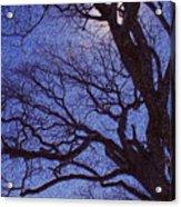Van Gogh Tree Acrylic Print