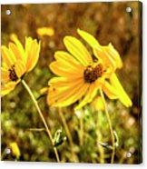 Variableleaf Sunflower Acrylic Print