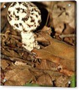 Varigated Mushroom Acrylic Print