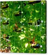 Vegetables Plant For Urban Life 2 Acrylic Print