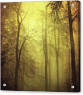 Veiled Trees Acrylic Print