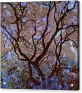 Veins Of Llife Acrylic Print
