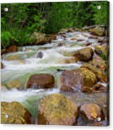 Velvet Green Forest Acrylic Print