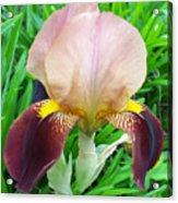 Velvet Iris Acrylic Print