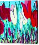 Velvet Tulips Acrylic Print