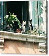 Venetian Cats Acrylic Print