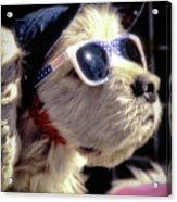 Venice Beach Dog Acrylic Print