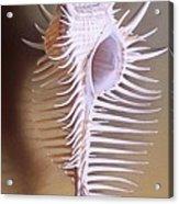 Venus Comb Murex Shell Acrylic Print