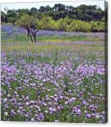 Verbena And Blue Bonnet Landscape Acrylic Print