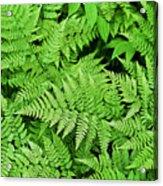 Verdant Ferns Acrylic Print