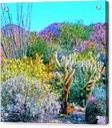Verdant Spring Mohave Desert Acrylic Print