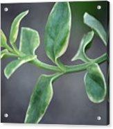 Verde Acrylic Print
