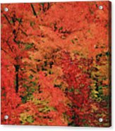 Vermont Autumn Acrylic Print