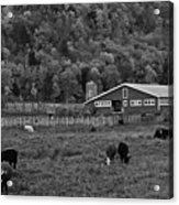 Vermont Farm With Cows Black And White Acrylic Print