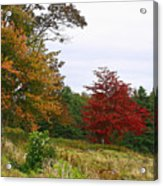 Vermont Roadside Color Acrylic Print