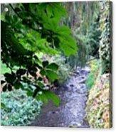 Vernon Creek Acrylic Print