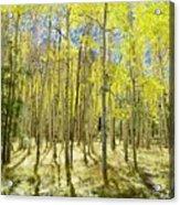 Vertical Aspen Forest Acrylic Print