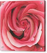 Vertigo Rose Acrylic Print by Ken Powers