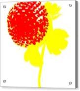 Very Berry Acrylic Print