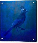 Very Blue Jay Acrylic Print