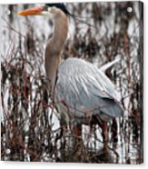 Very Handsome Heron  2845 Acrylic Print