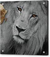 Very Sad Lion, Cry For Africa Acrylic Print