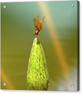 Very Small Dragonfly In Vertical Position Acrylic Print