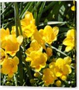 Very Sunny Yellow Flowers Acrylic Print
