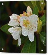 Very Wet Flower Acrylic Print