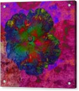 Vibrant Flower Series 1 Acrylic Print by Jen White