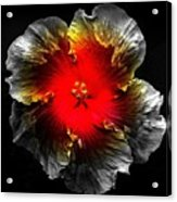 Vibrant Flower Series Acrylic Print by Jen White