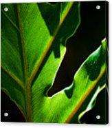 Vibrant Green Acrylic Print