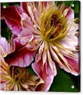 Vibrant Lillies Acrylic Print