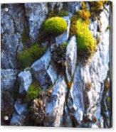 Vibrant Moss Acrylic Print