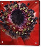 Vibrant Red Acrylic Print