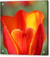Vibrantly Yours Acrylic Print