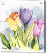 Vickis Tulip Acrylic Print