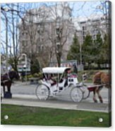 Victoria Horse Carriages Acrylic Print