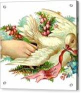 Victorian Dove Acrylic Print