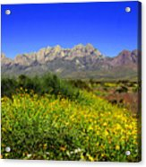 View From Dripping Springs Rd Acrylic Print