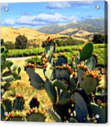 View From Santa Rosa Road Acrylic Print