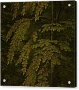 View In A Forest  Outer Right Wing Of A Triptych  Gerard David  C  1505   C  1515 Acrylic Print