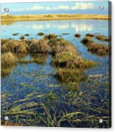 View Of The Marsh Acrylic Print