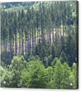 View Of The Mixed Forest Acrylic Print