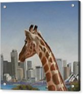 View Towards Sydney Acrylic Print