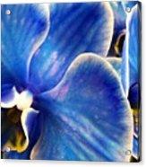 Vincent's Orchid Acrylic Print
