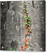 Vine In Autumn Acrylic Print