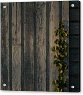 Vine On Wood Acrylic Print